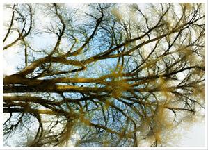Treehori_6